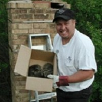 Unwanted Pests Living In Your Chimney