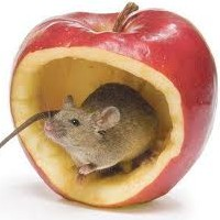 Use Peppermint Oil to Run the Mice Out Your Home