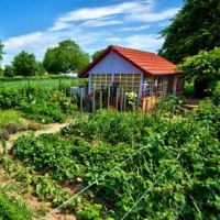Useful Advice For Creating Beautiful Home Landscapes!