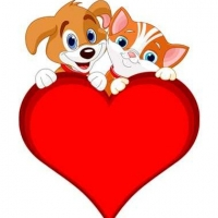 Valentine\'s Day Gift Ideas For Pets