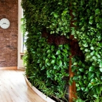 Vertical Gardens – Less Space, More Yield