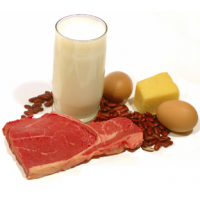 What Foods Are High In Protein?