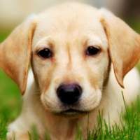 What is Hypoallergenic Dog Food?