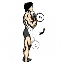 What Is The Best Biceps Exercises