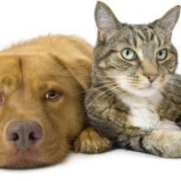 What Is The Best Way To Get Rid Of Fleas?
