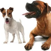 What is The Best Way To Get Rid Of Fleas on Dogs