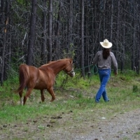 What Kind Of Horseanality Does Your Horse Have?