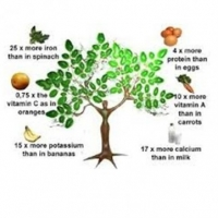 What Moringa Tree Does To Our Body Health