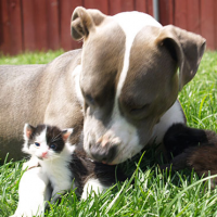 What to Do About the Bully Breeds?