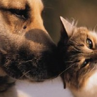 When Animal Rescues Lose Sight Of Their Mission, The Pets Pay