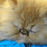 Why Declawing Kittens is Cruel, There are Alternatives To Stop Cats Scratching