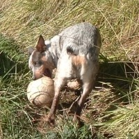 Why I Feed My Dogs A Raw Diet