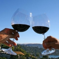 Wine Cooler Reviews  -  Everything You Need To Know