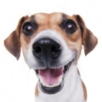 Wow! Here's What Happens When Commercial Dog Food For Allergies Goes Horribly Wrong
