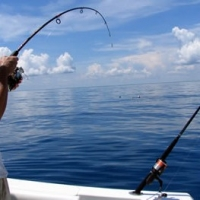 Yellowtail Fishing In the Florida Keys