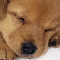 Your Fur Baby: Why Most People Think Of their Dog As A Child Rather Than A Pet