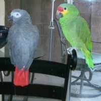 Your Parrots Behavior
